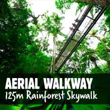 Daintree Rainforest Aerial Walkway - Daintree Discovery Centre