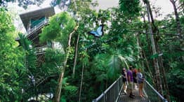 The Daintree Discovery Centre's Aerial Walkway