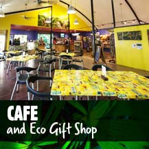 Daintree Rainforest Coffee Shop - Daintree Discovery Centre