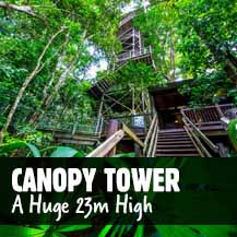 Daintree Rainforest Canopy Tower - Daintree Discovery Centre