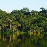 Our History With Tropical Rainforests Goes Far Deeper Than Wehellip