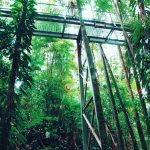 The Daintree Discovery Centres Aerial Walkway is a spectacular wayhellip