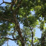 Rainforests are magical! Did you know that rainforests  hellip