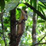 Daintree Australia daintree daintreediscoverycentre australia wildlife  nicktarrant27